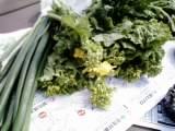 とれたて新鮮野菜